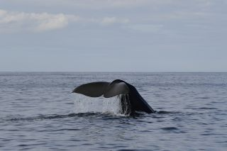 Sea Safari Andenes | Whale